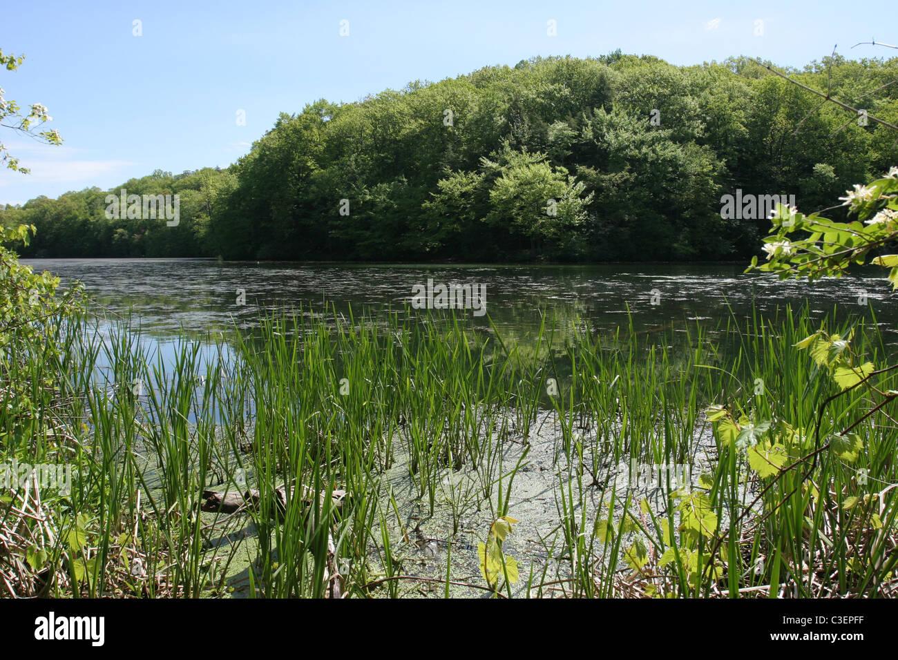 Eastman Lake, Durand-Eastman Park - Stock Image