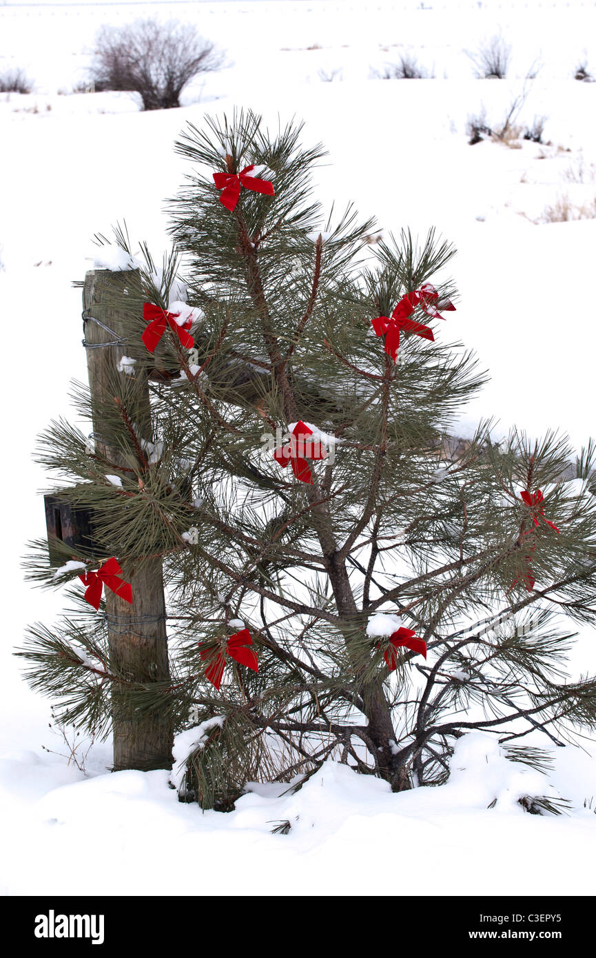 A small Christmas tree decorated with red bows leans against a ranch fence in the Potomac Valley of western Montana. - Stock Image