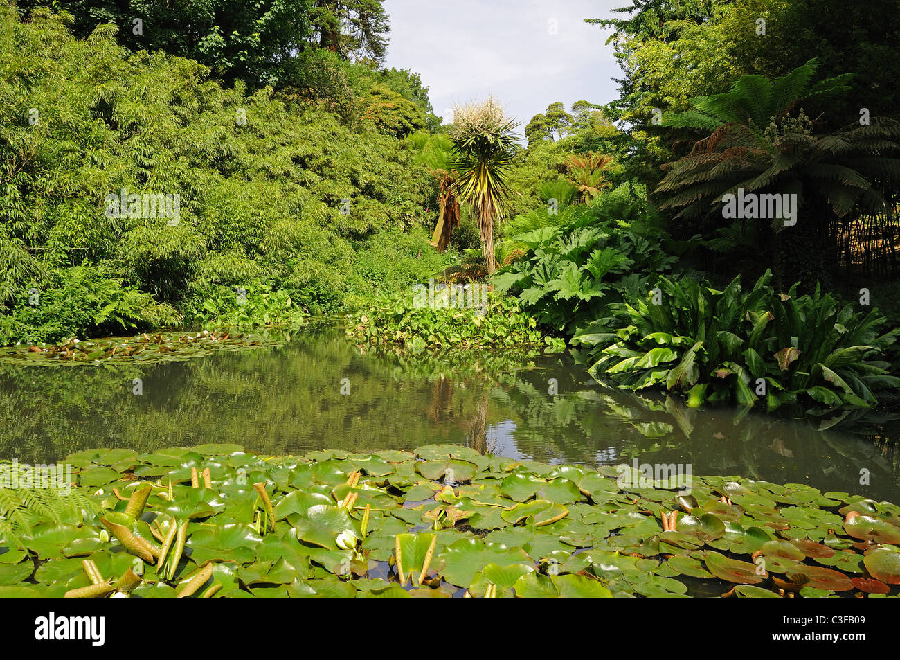 The jungle area at The Lost Gardens of Heligan in Cornwall, UK - Stock Image
