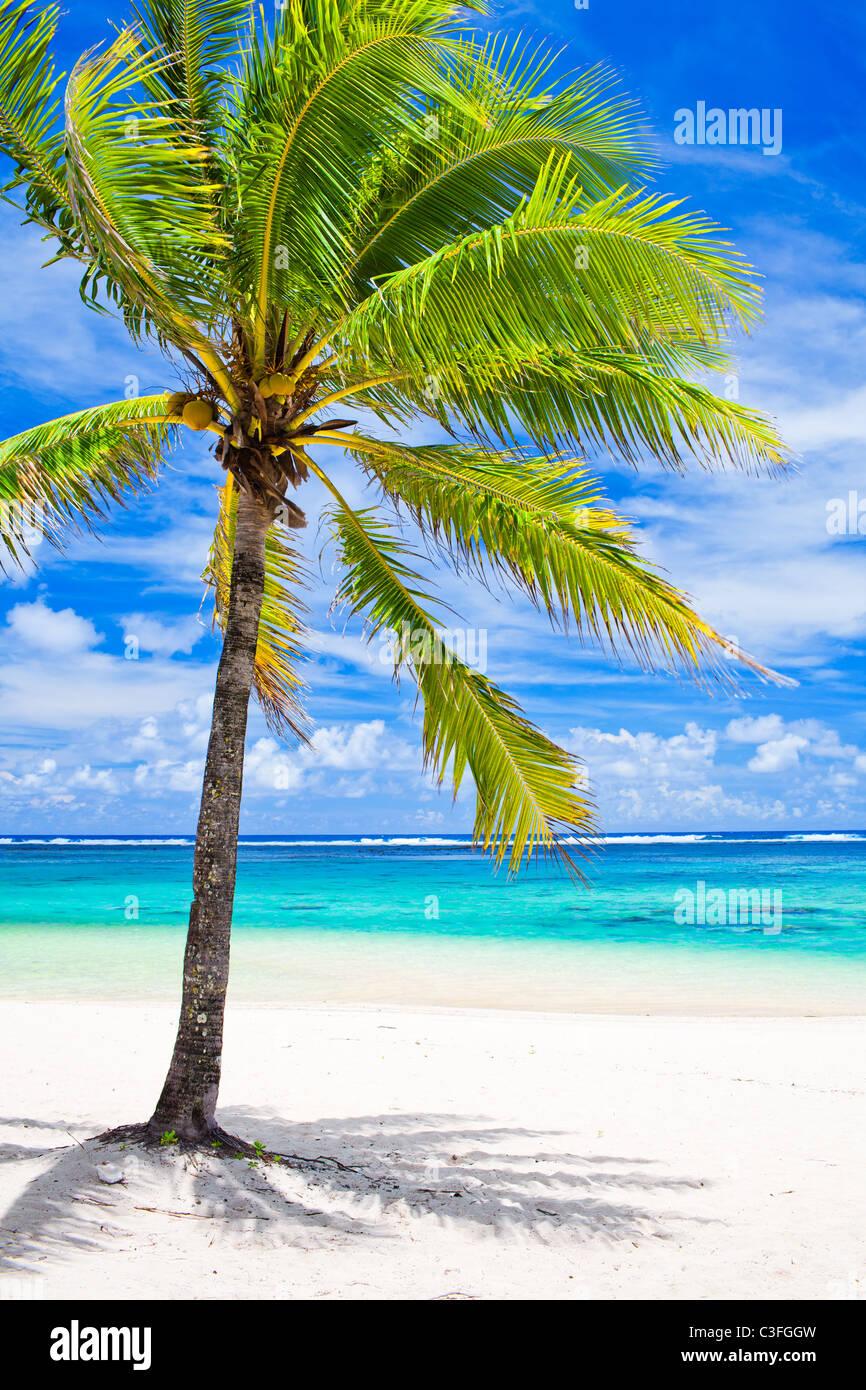 Single palm tree overlooking amazing blue lagoon - Stock Image