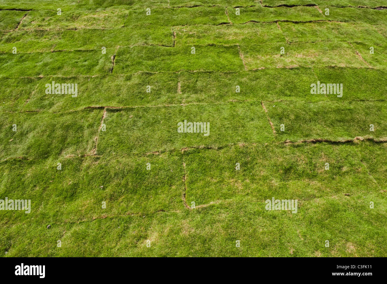 Newly laid grass turf to create a lawn - Stock Image