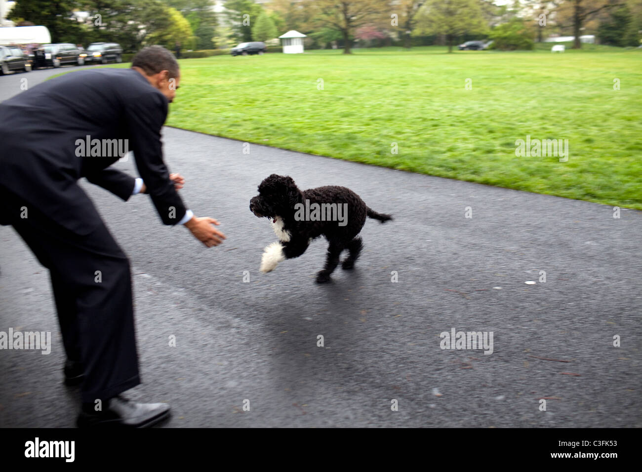 president-barack-obama-plays-with-family-dog-bo-on-the-south-lawn-C3FK53.jpg