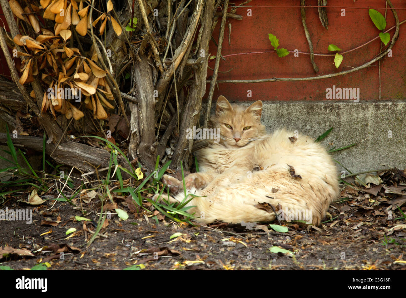 Scruffy Cat Sat In Leaves Lying Against A Wall At The Estancia La Stock Photo Alamy