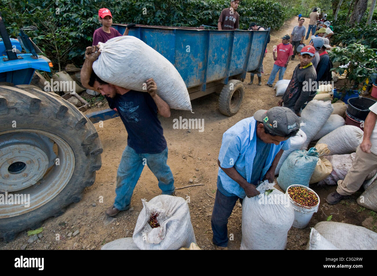 Seasonal coffee pickers Rodeo plantations Central valley Costa Rica - Stock Image