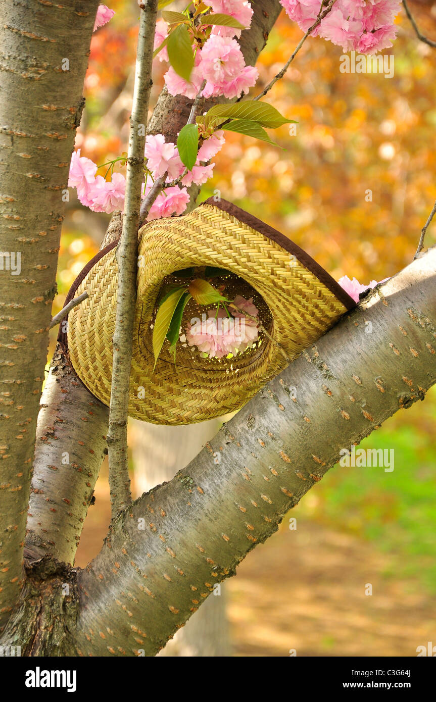 A summer straw hat and spring blossoms. - Stock Image