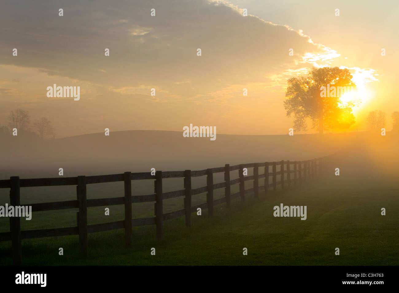 Sunrises over a foggy fenced pasture land behind a tree. - Stock Image