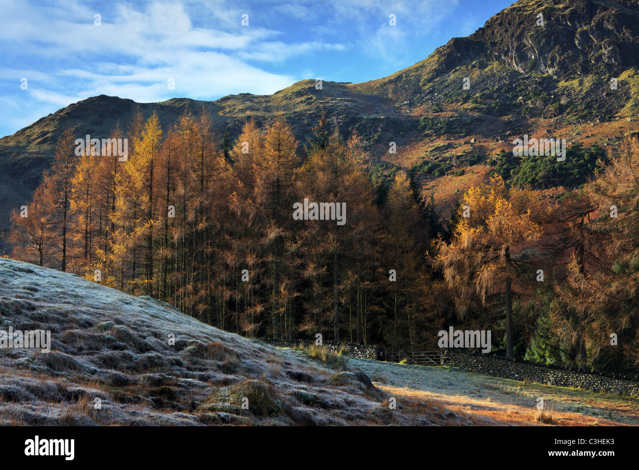 Frosty autumn morning along the shores of Blea Tarn showing brightly colored larches below Blake Rigg Stock Photo
