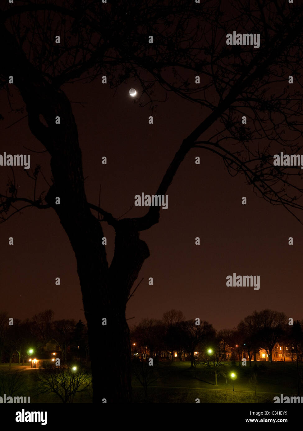 view of crescent moon through a severely pruned ash tree in Powderhorn Park, Minneapolis, MN - April 2011 - Stock Image