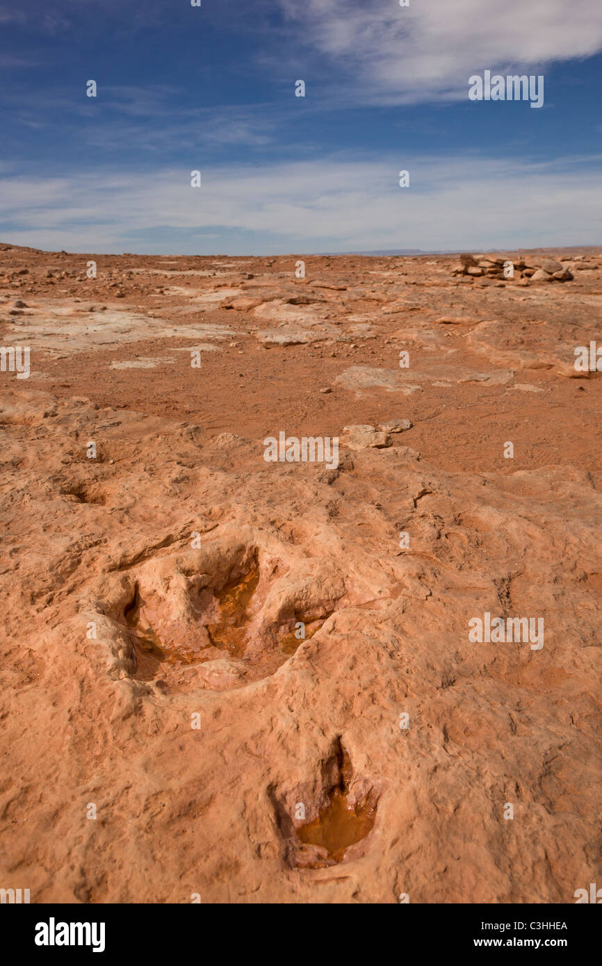 Pair of early Jurassic Therapod tracks, mother and young Dilophosaurus wetherilli, at Moenkopi Dinosaur Tracks, - Stock Image