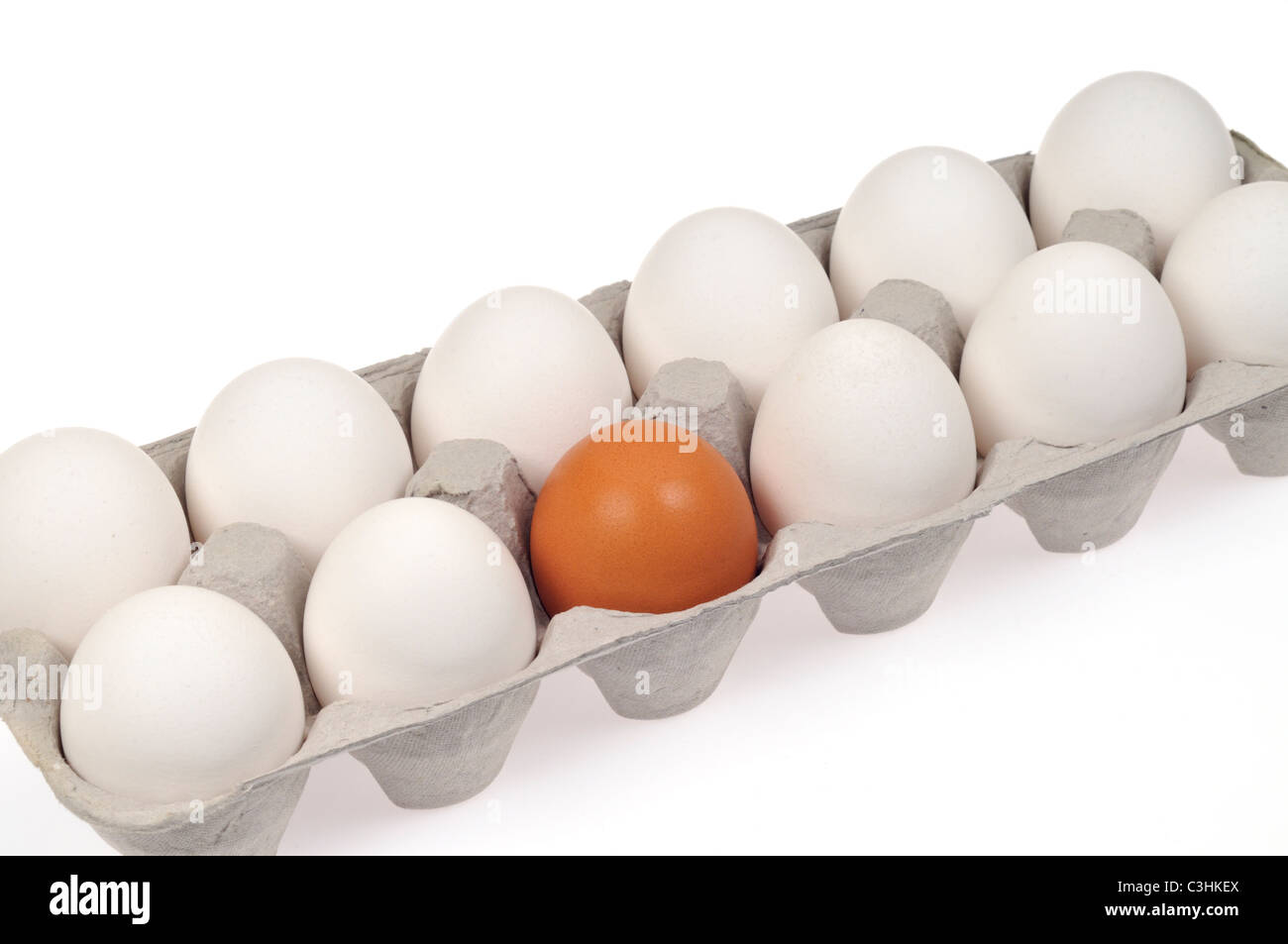 Close-up of concept shot of alienation and discrimination using 11 white eggs and 1 brown egg in carton, white background. - Stock Image