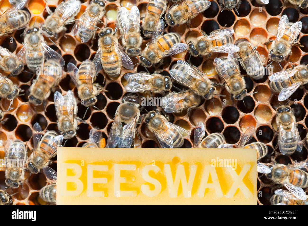 Bees and beeswax - Stock Image