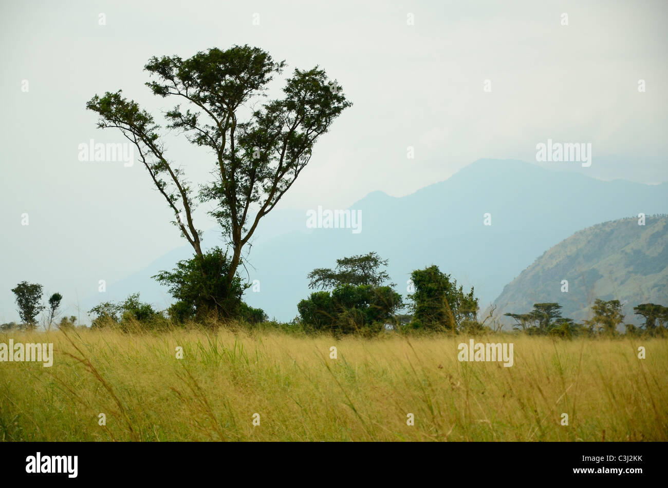Virunga National Park, eastern Democratic Republic of Congo, Central Africa in the great Rift Valley. - Stock Image