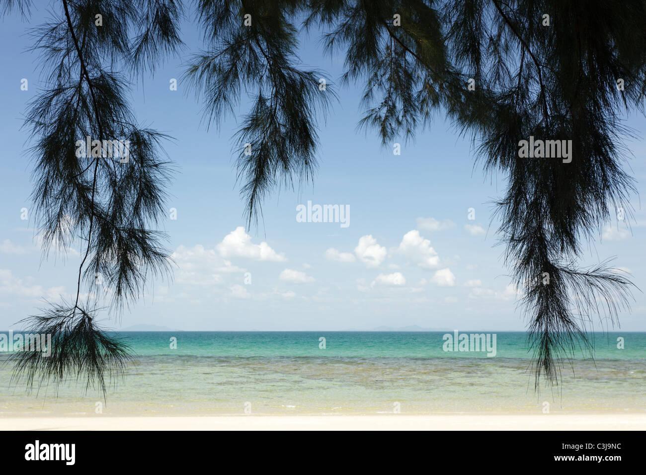 Casuarina equisetifolia filao tree in tropical beach, ko laoliang island, thailand - Stock Image