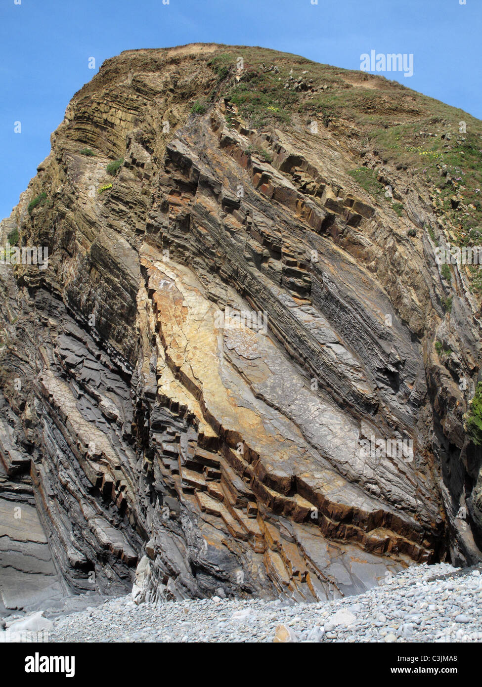 Contorted and tilted sandstone strata shown in the cliffs at Sandymouth Bay, North Cornwall - Stock Image
