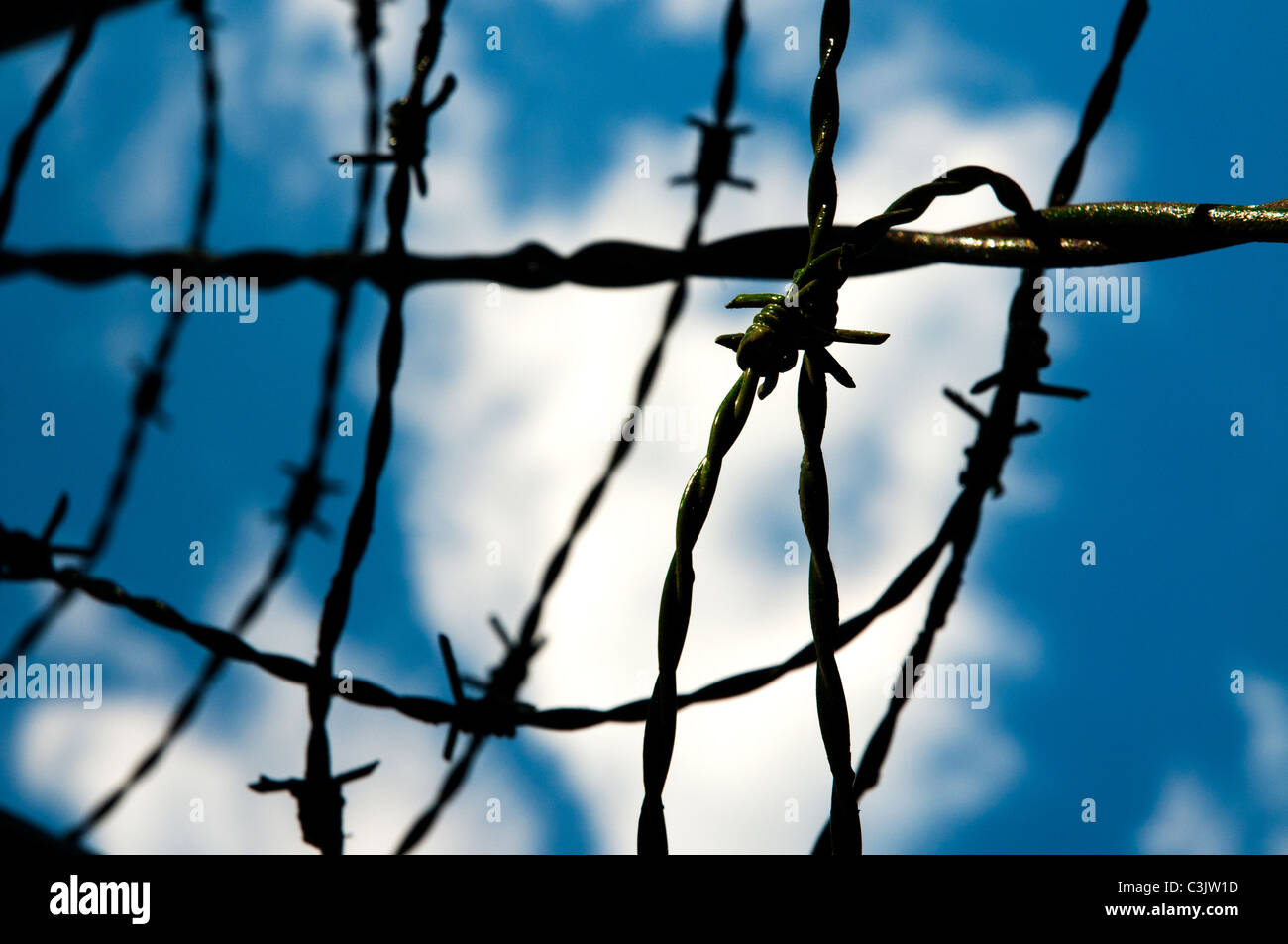 Close up shot of a barbed wire - Stock Image