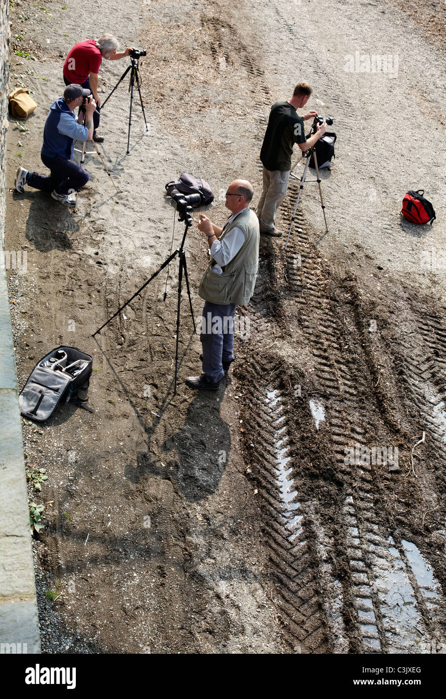 Amateur photographers taking pictures - Stock Image