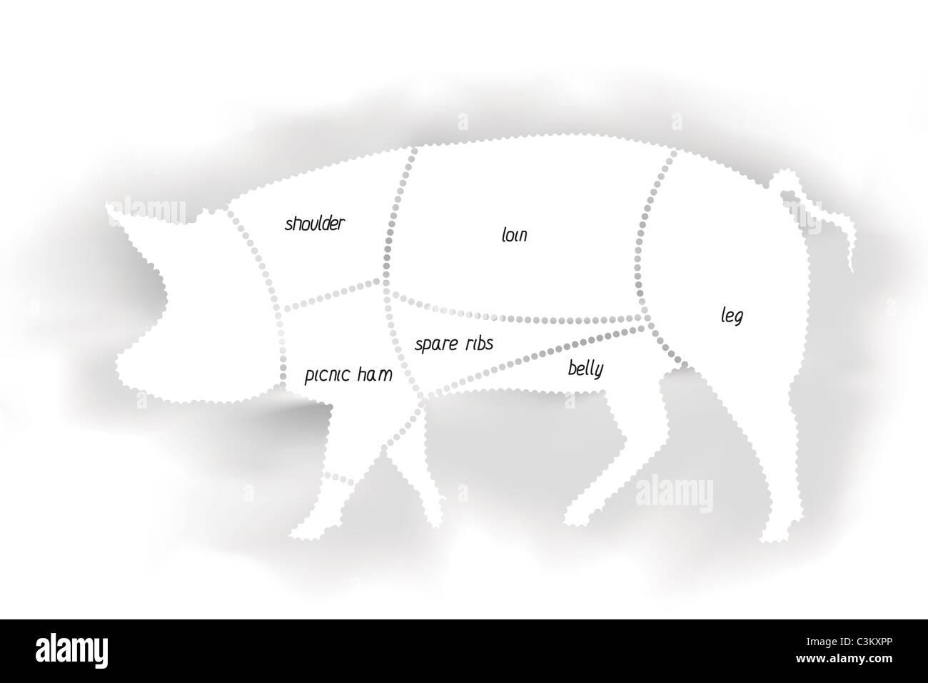 pork meat diagram C3KXPP meat diagram stock photos & meat diagram stock images alamy