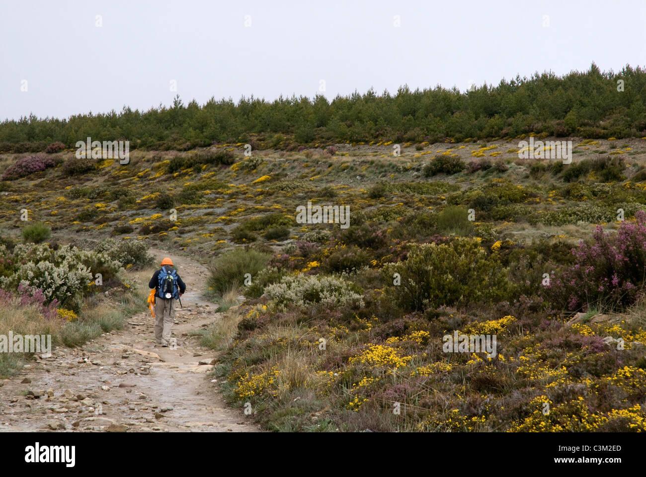 Hillwalker, Camino de Santiago, Northern Spain - Stock Image