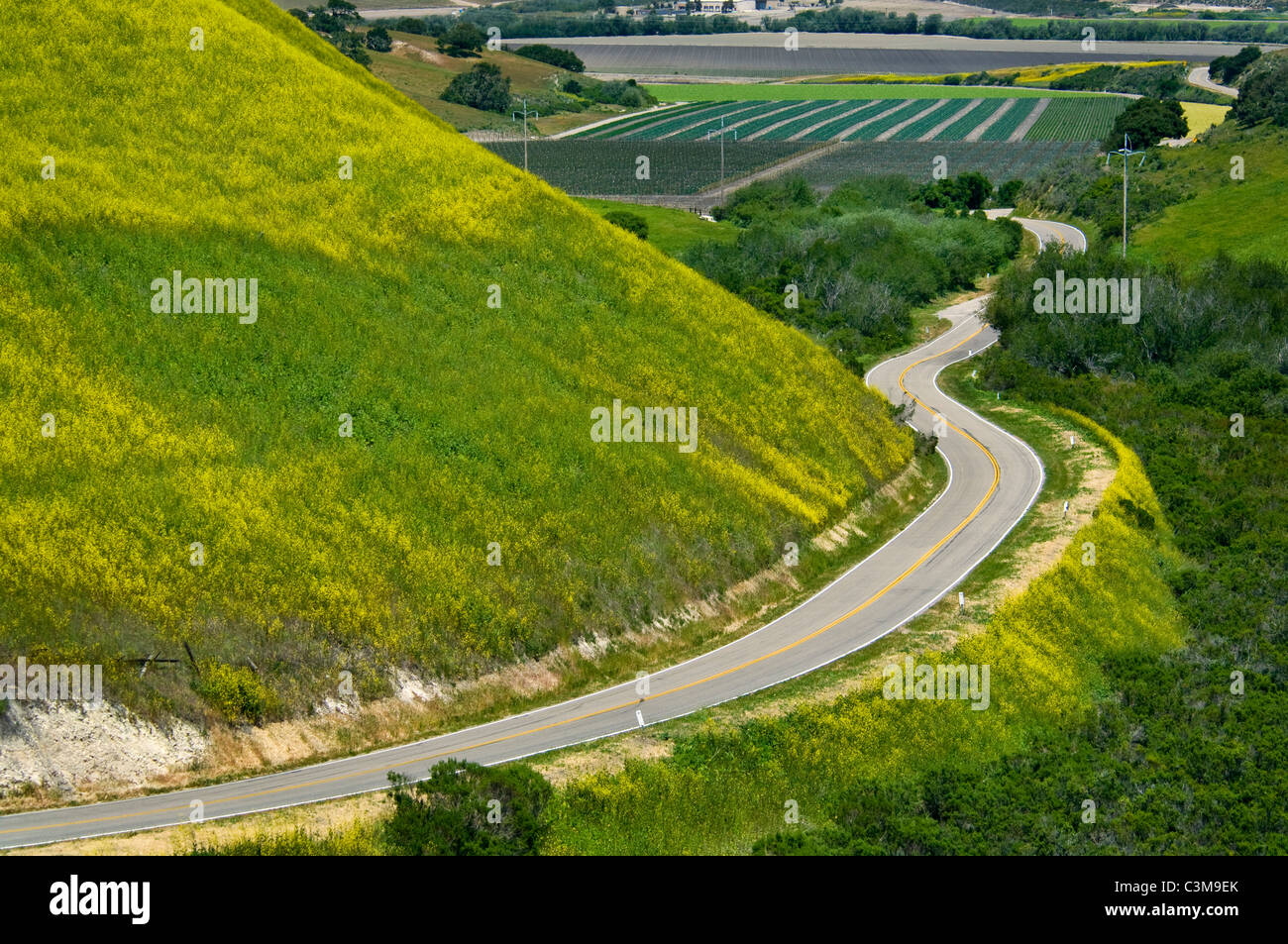 Country road curves through green hills and agriculture valley is Spring, near Lompoc, Santa Barbara County, California - Stock Image