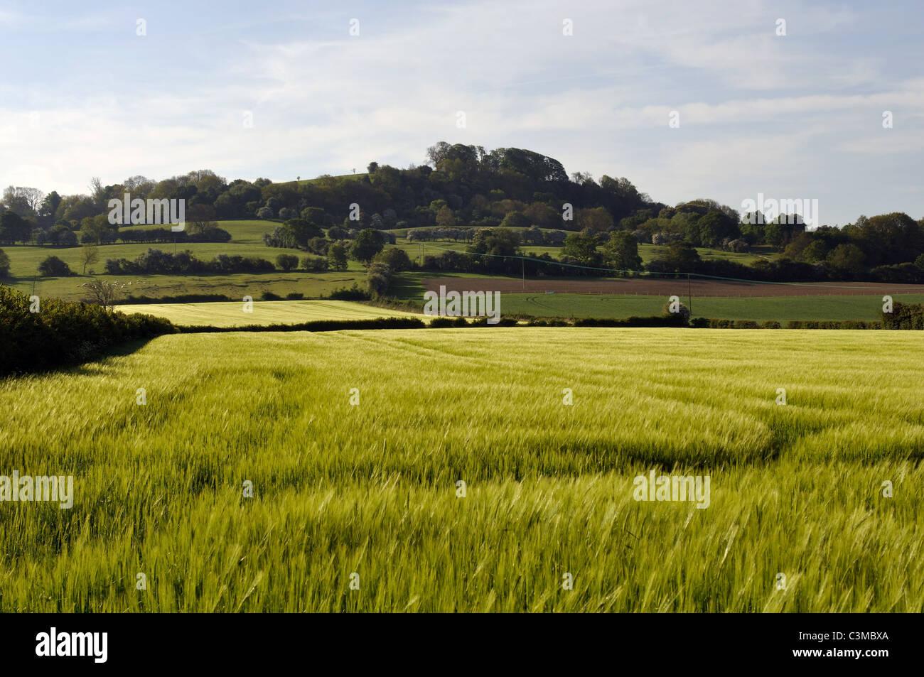 View towards Meon Hill, Warwickshire, England, UK - Stock Image