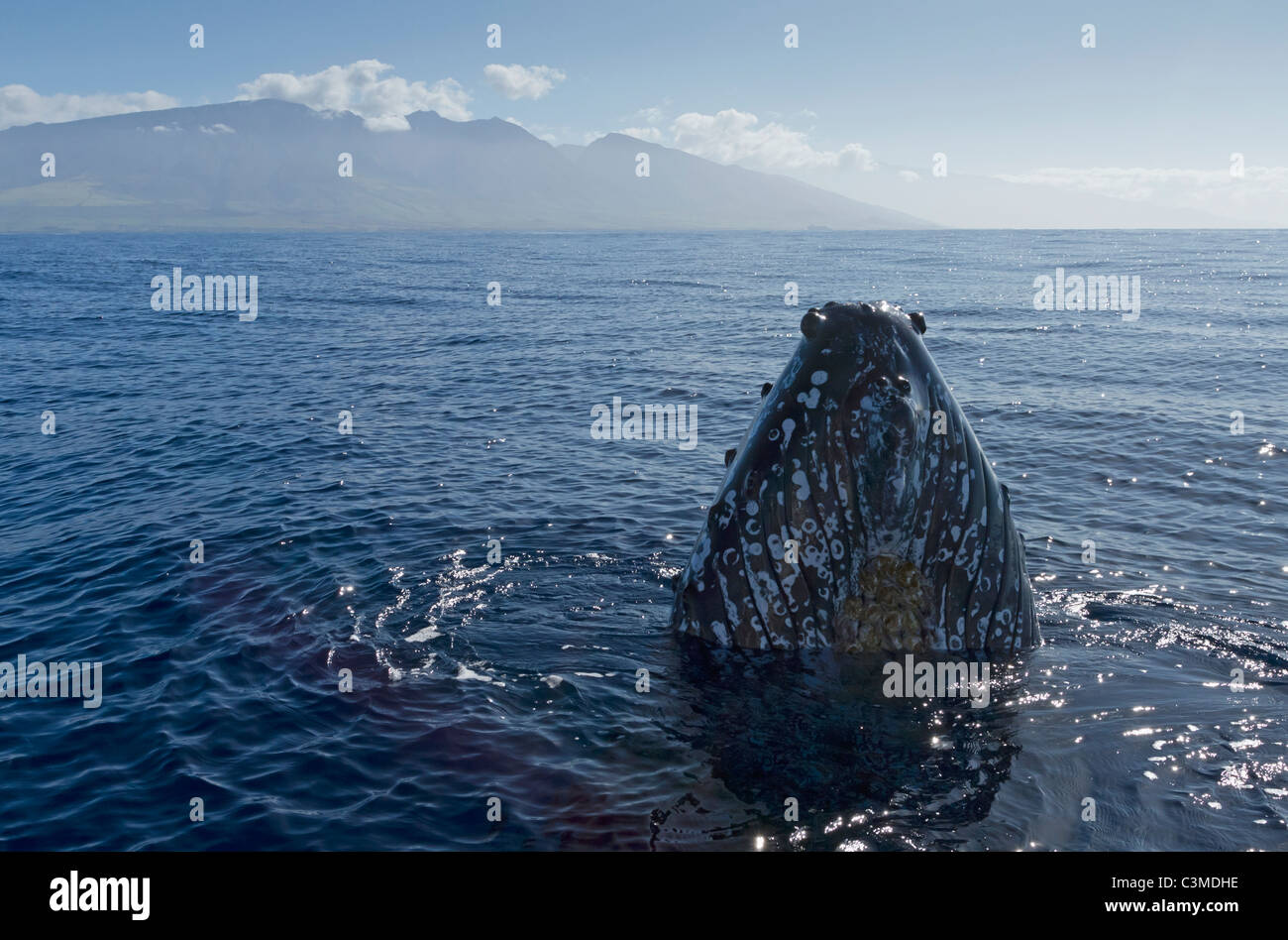 Humpback comes up to look at the boat with the West Maui Mountains in the distance. - Stock Image