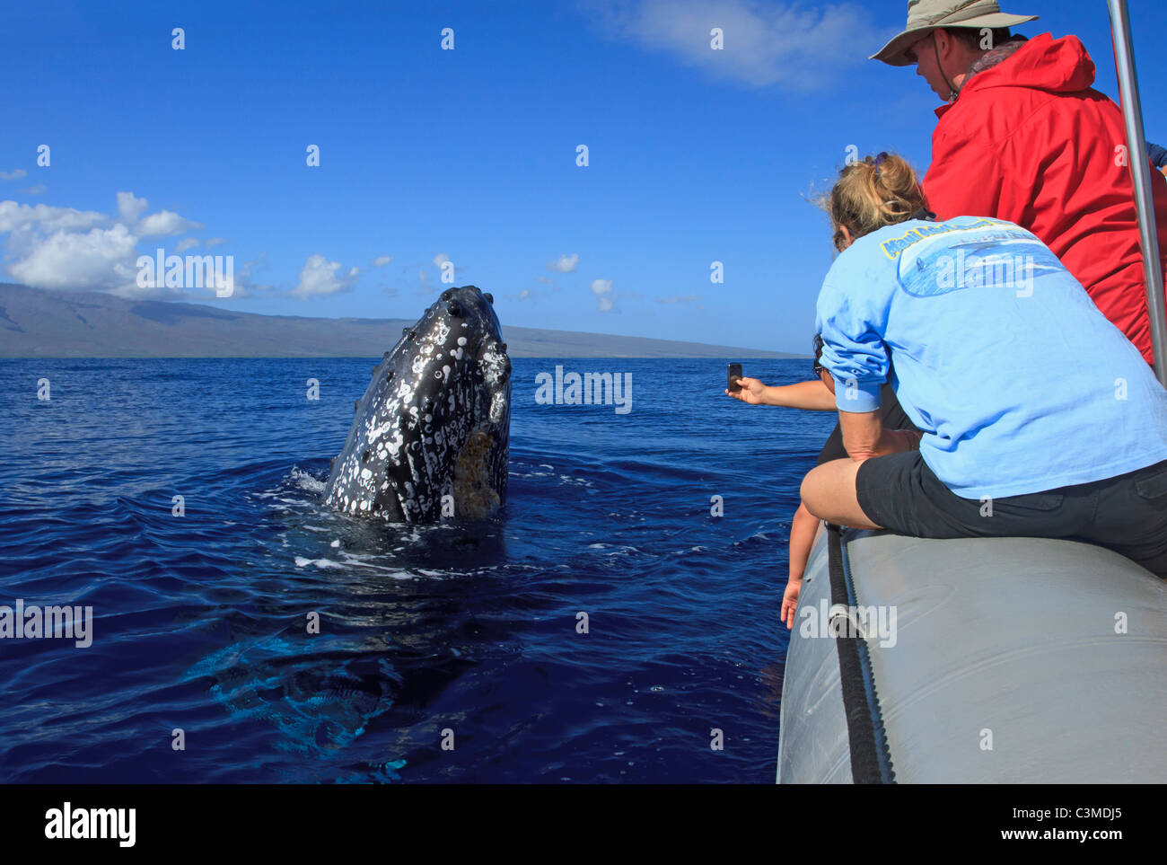 Humpback whale comes up to look the people on a tour boat, Maui, Hawaii. - Stock Image