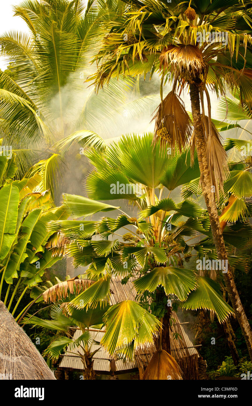 Barbeque Smoke Hut among Coconut Palm Trees, Malolo Island Resort , Mamanuca Islands, Fiji - Stock Image