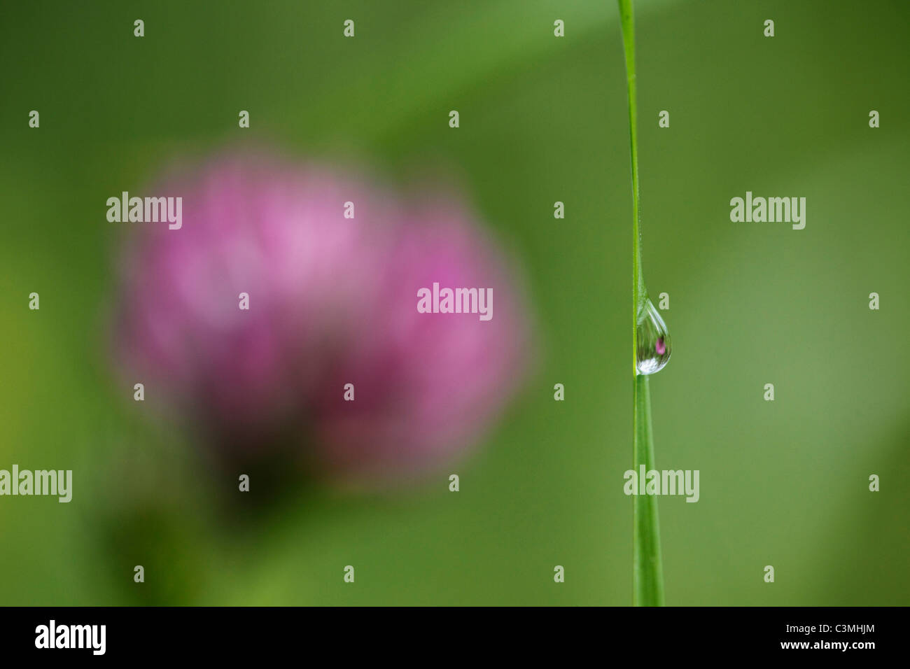 Germany, Water drop on blade of grass, close-up - Stock Image