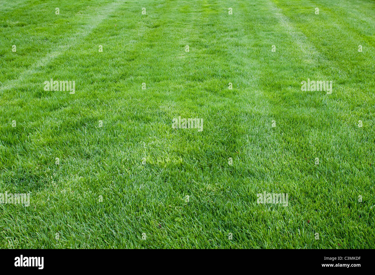 A lawn in the USA. - Stock Image
