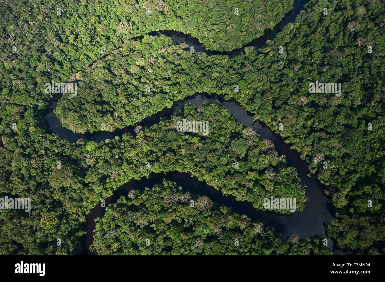 Meandering river in Cuyabeno Reserve., Amazonasregenwald. - Stock Image