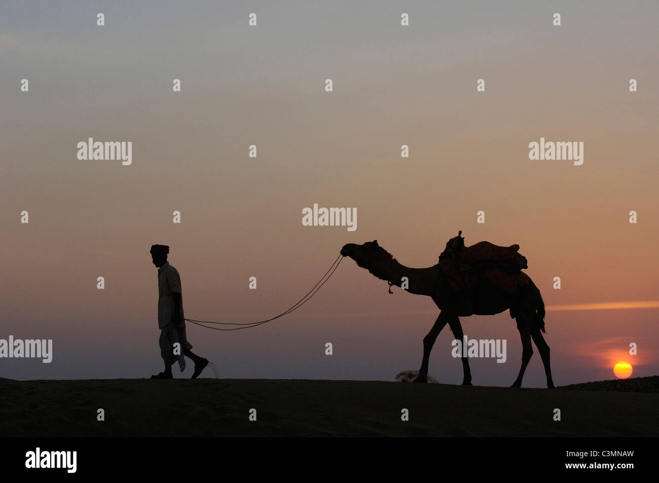 Dromedary, One-humped Camel (Camelus dromedarius) with Pastoralist in the Thar desert silhouetted against the setting Stock Photo