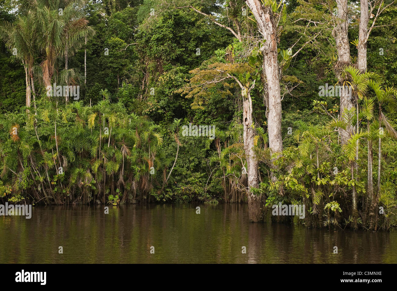 Flooded Igapo forest. Cocaya River. Eastern Amazon Rain Forest. Border of Peru and Ecuador, South America. - Stock Image