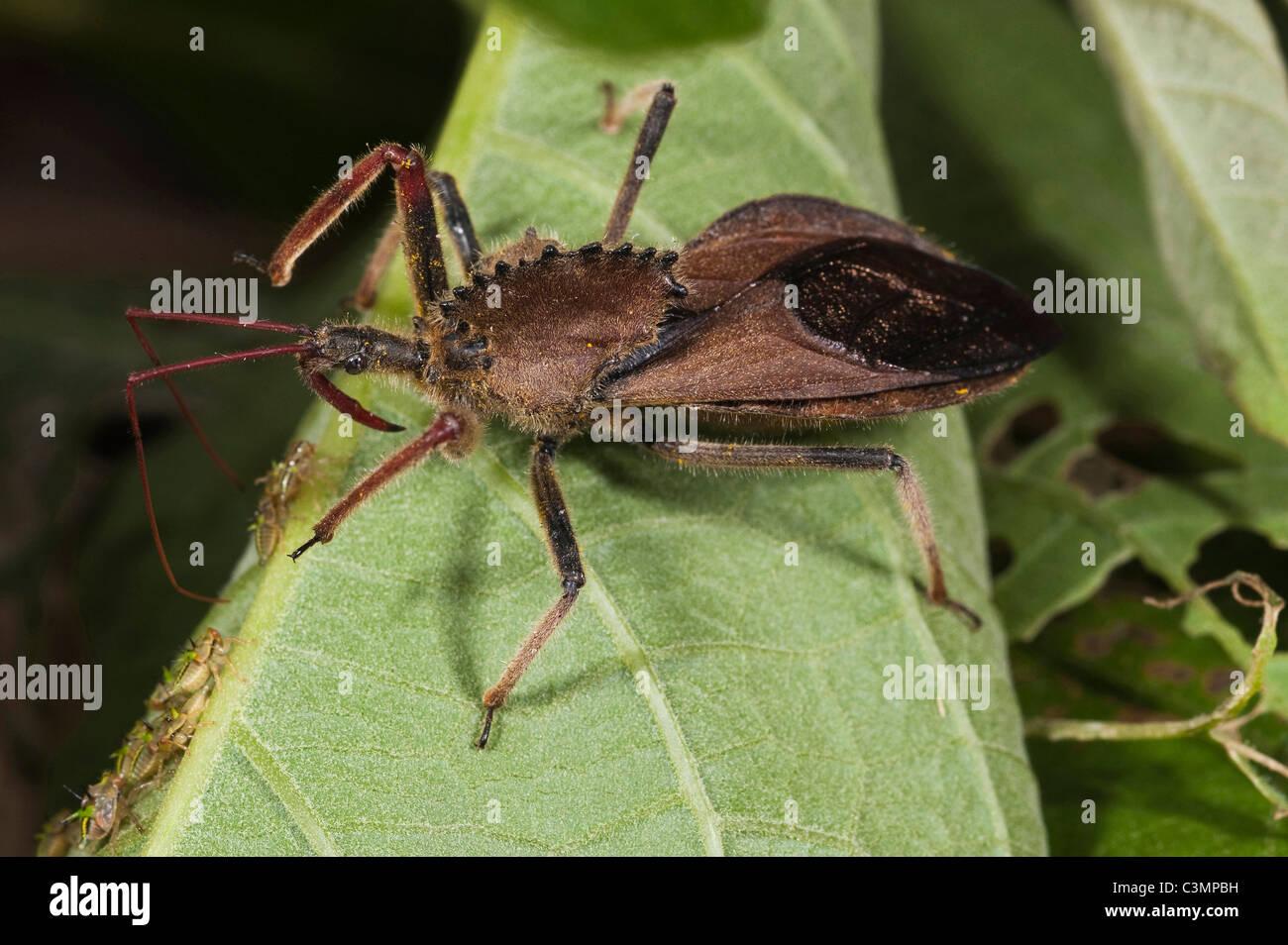 bug noir coqsCheerleaders chauds ayant sexe lesbien