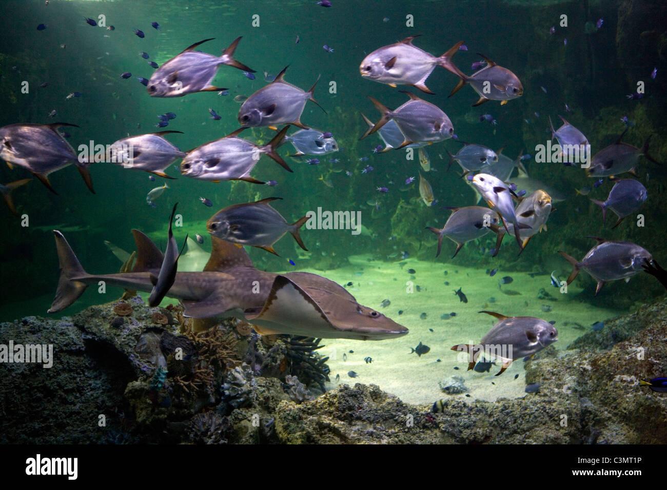 Australia. Sydney. Sydney Aquarium. - Stock Image