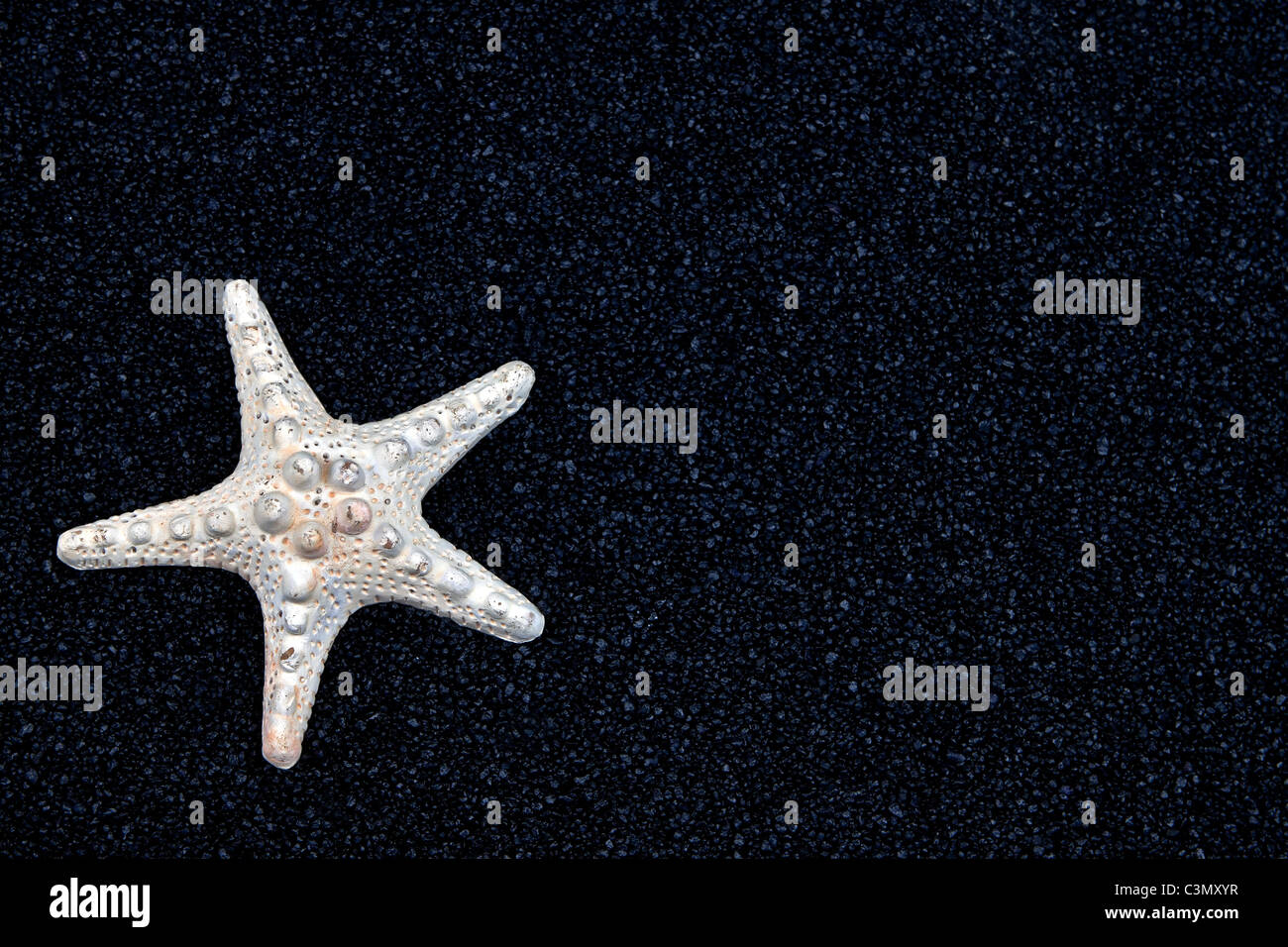 a white starfish on black sand - Stock Image