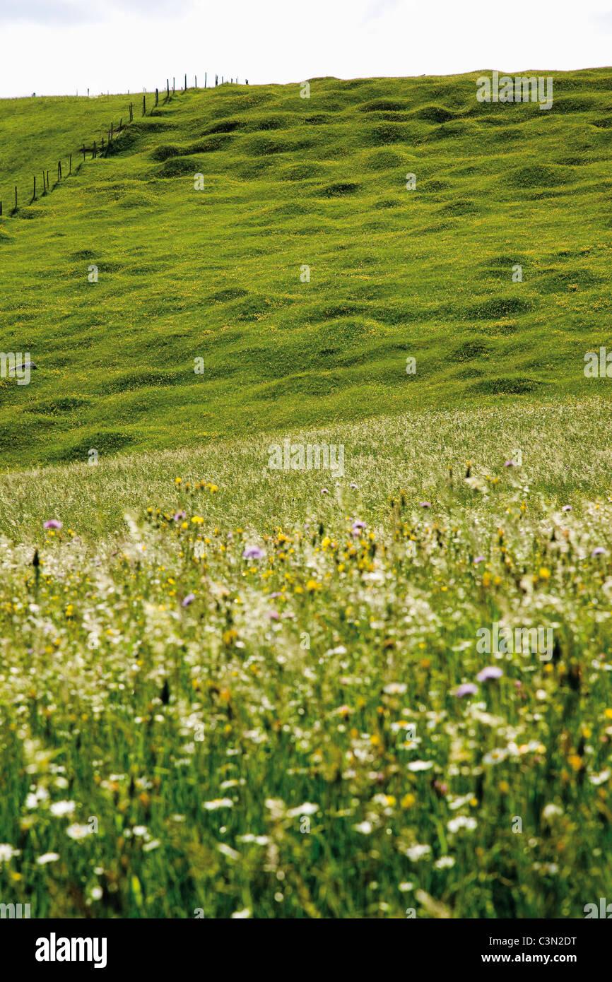 Germany, Bavaria, hump-meadow - Stock Image