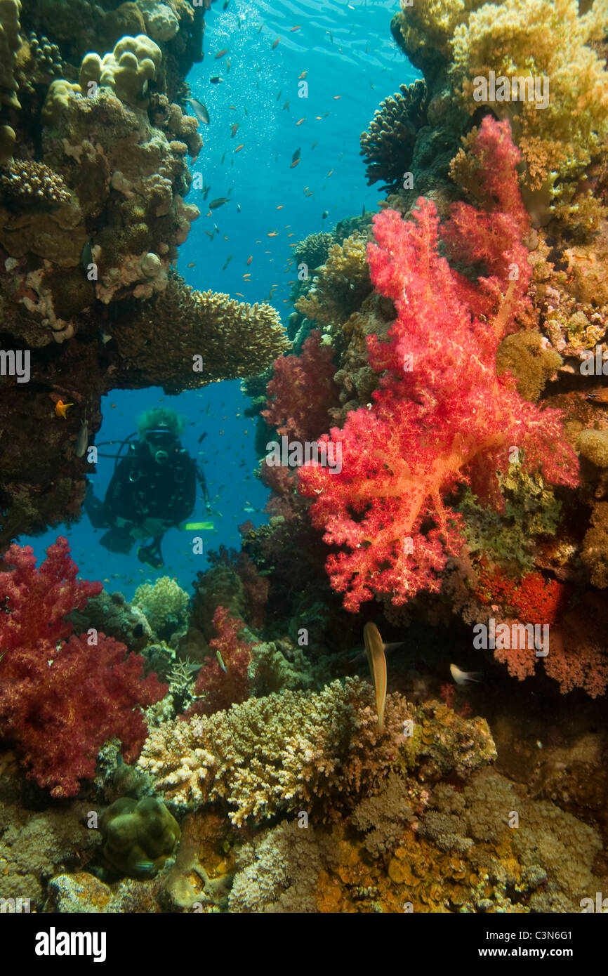 Female diver in moses rock. Colorful soft coral and fish can be seen ...