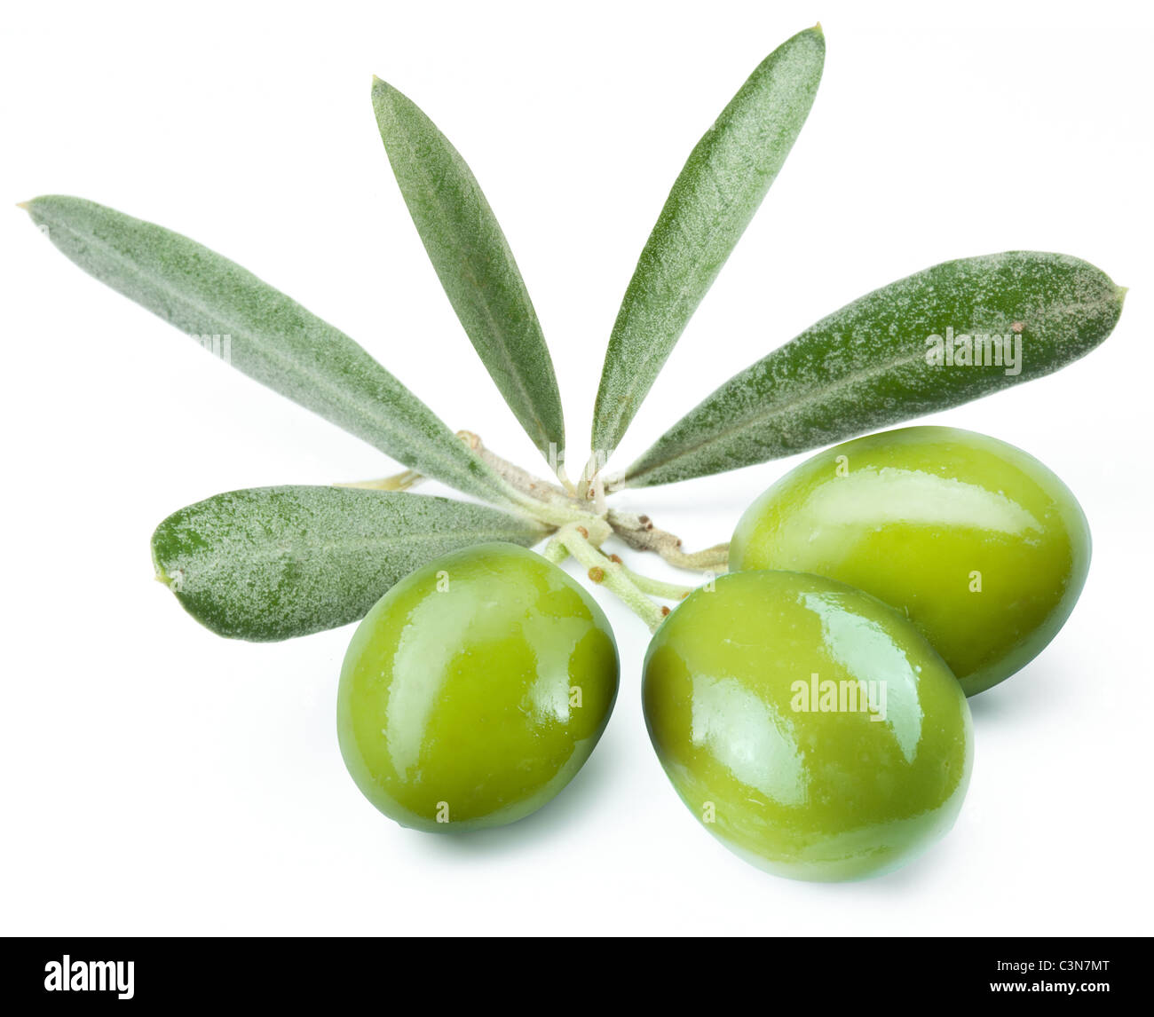 Three green olives on the branch. Object on a white background - Stock Image