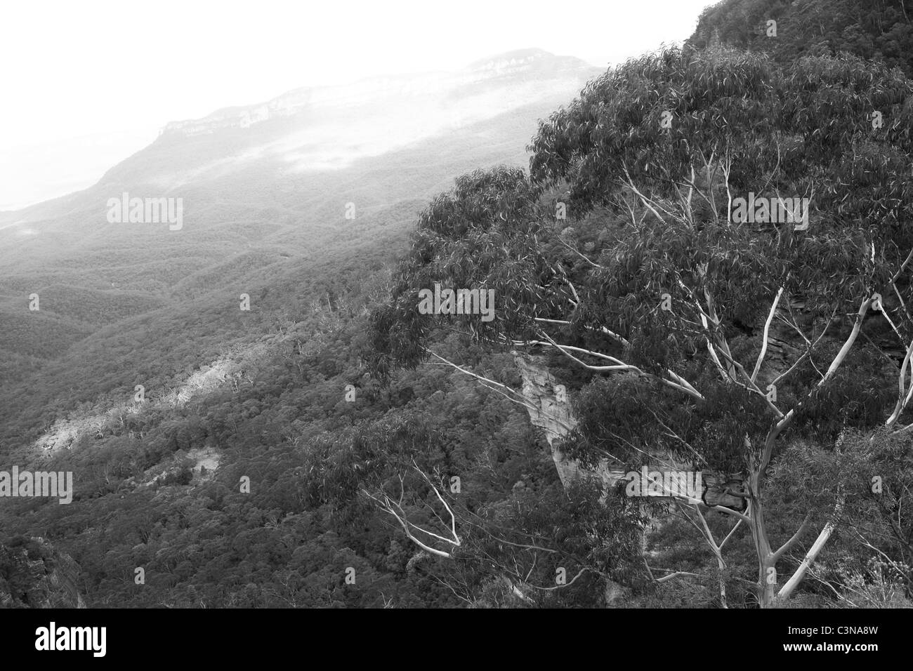 Eucalyptus tree before vast landscape of Blue Mountains - Katoomba, NSW, Australia Stock Photo