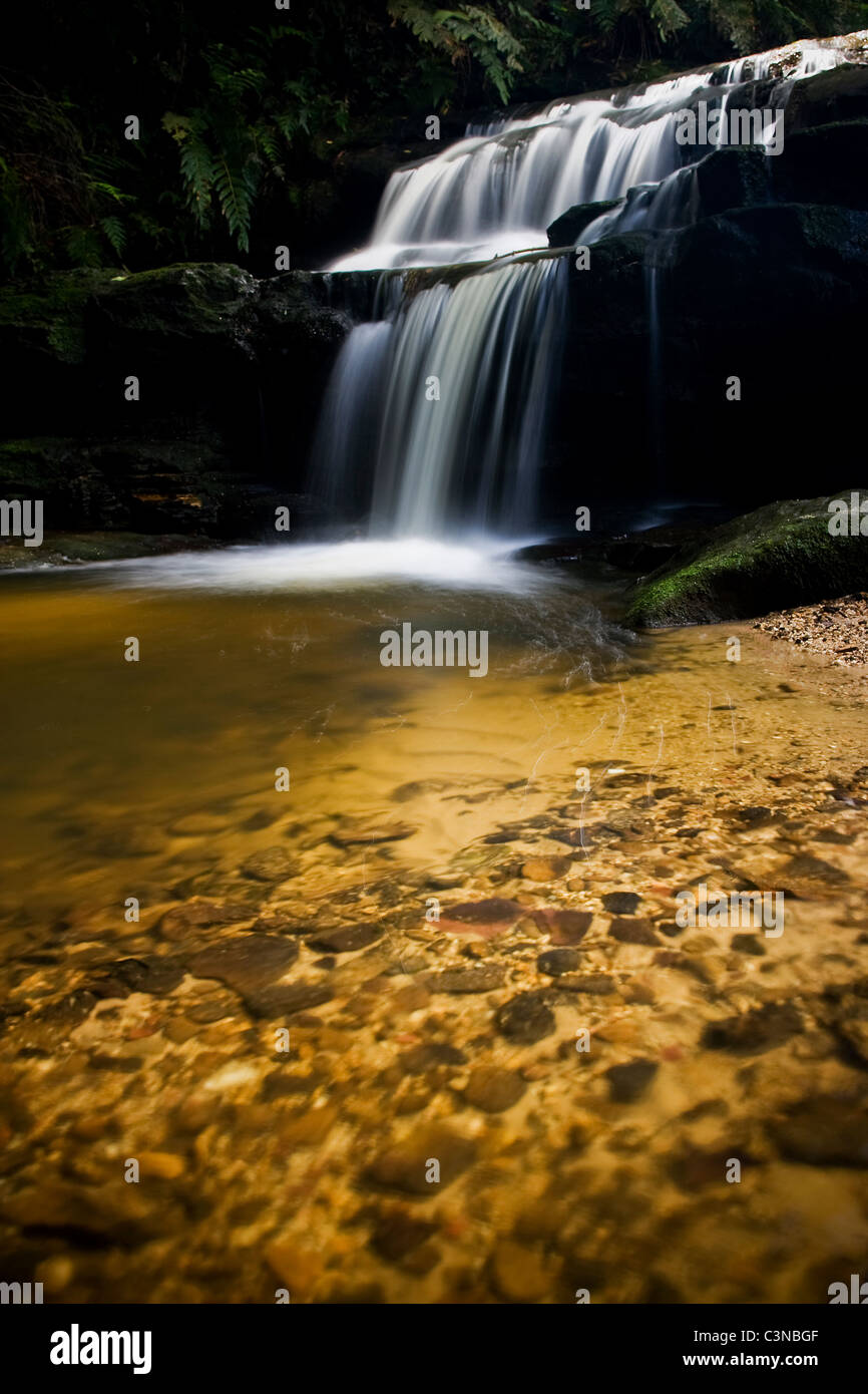 Leura Cascades and foreground in the Blue Mountains of Sydney, Australia - Stock Image