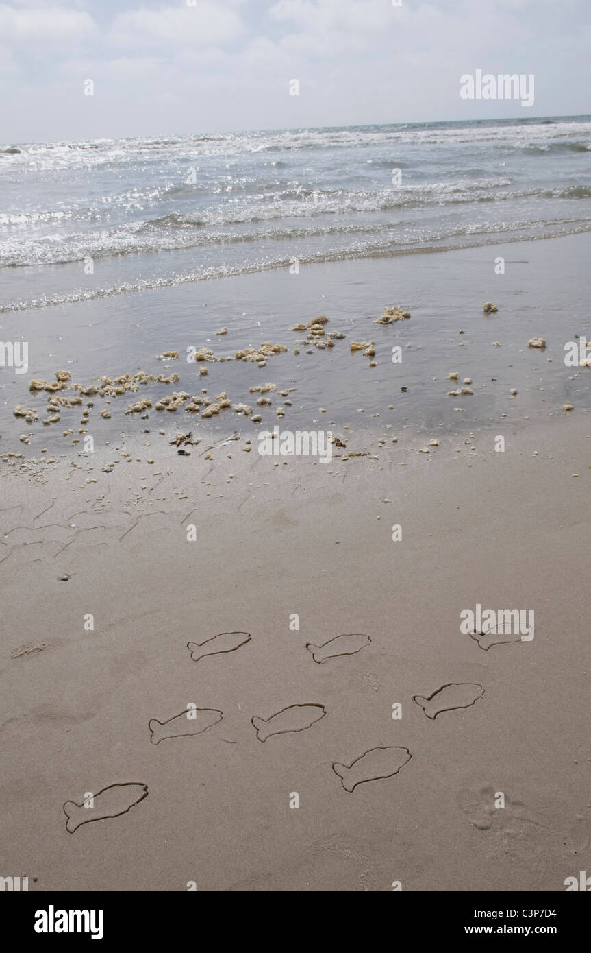Germany, Schleswig Holstein, Amrum, Fish drawings on sandy beach - Stock Image