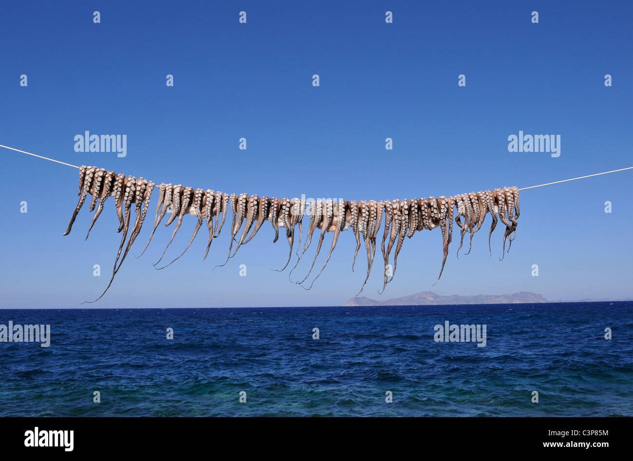 octopi hanging on clothesline - Stock Image