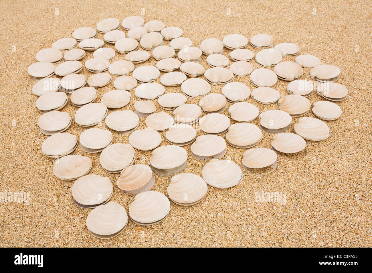 New Zealand,  Clam shells forming heart on sand Stock Photo