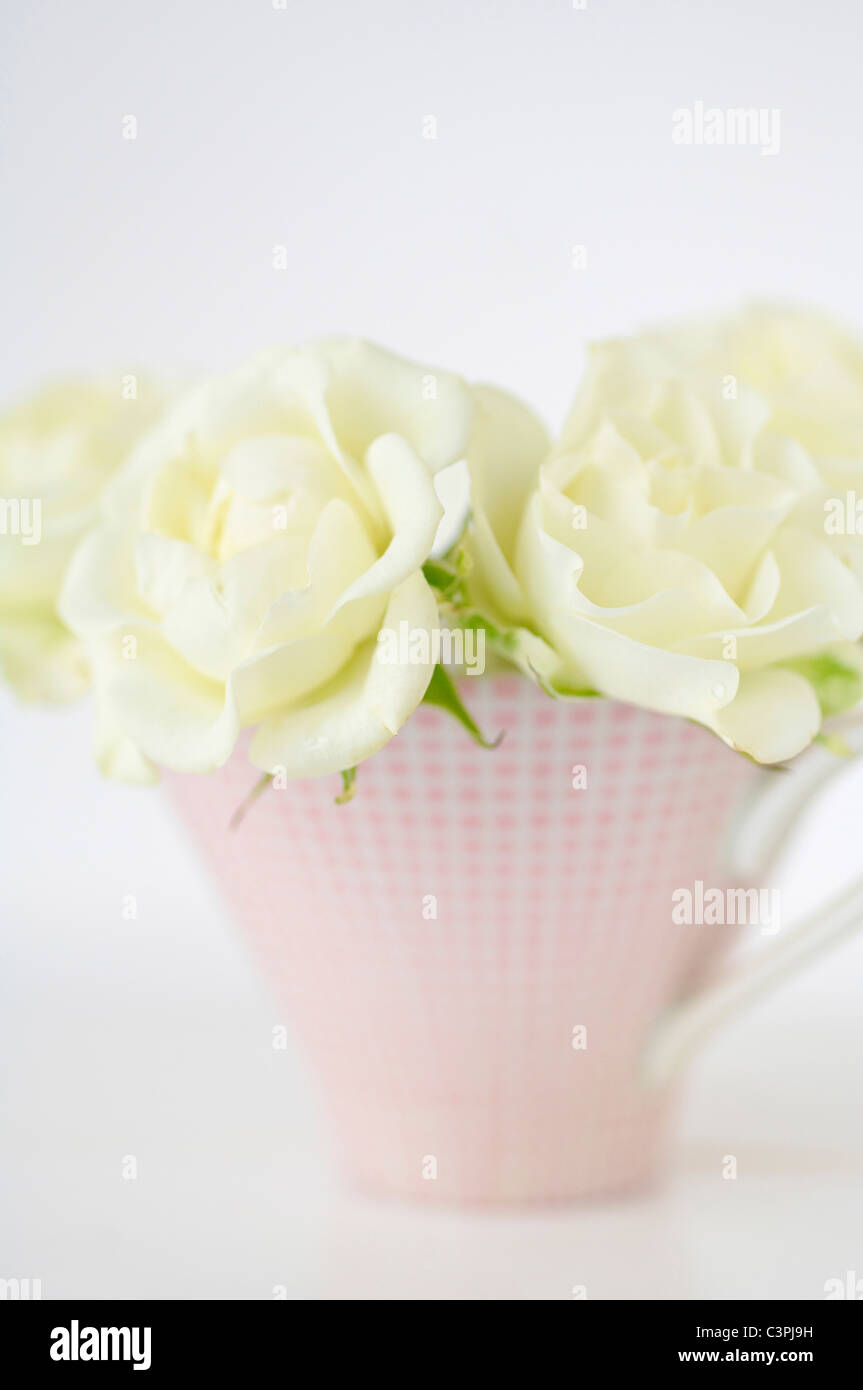 Flower vase with white roses on white background, close up - Stock Image