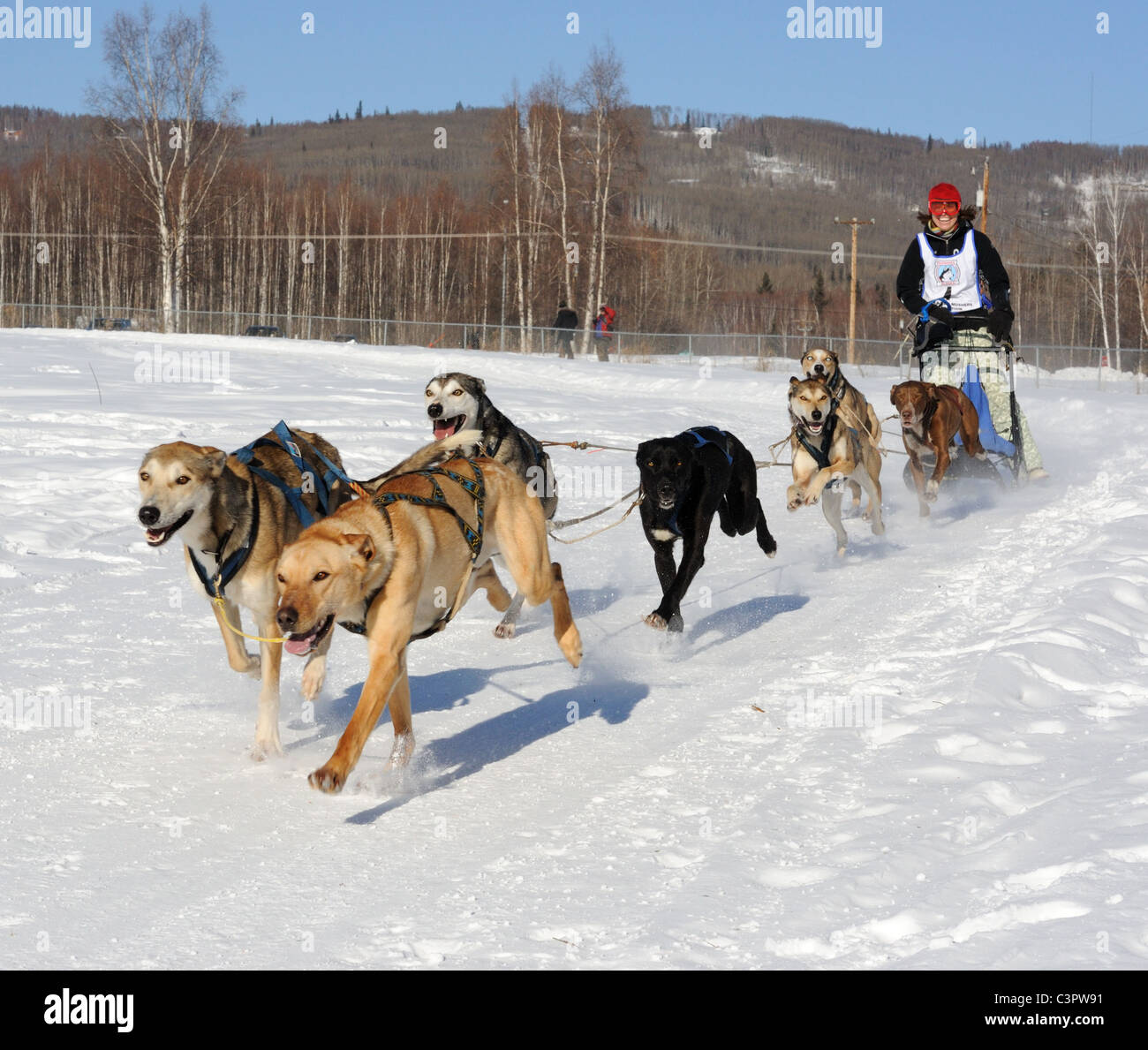 Limited North American Championship Sled Dog Races.  Six Sled Dog Competition. March 11-13, 2010 in Fairbanks, Alaska. - Stock Image