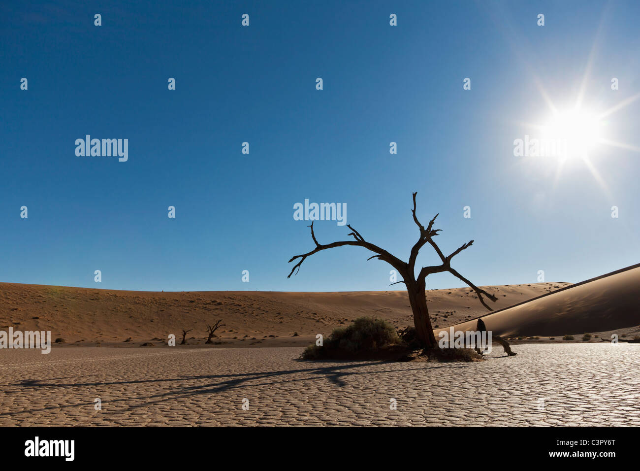 Africa, Namibia, Namib Naukluft National Park, Dead tree in the namib desert - Stock Image