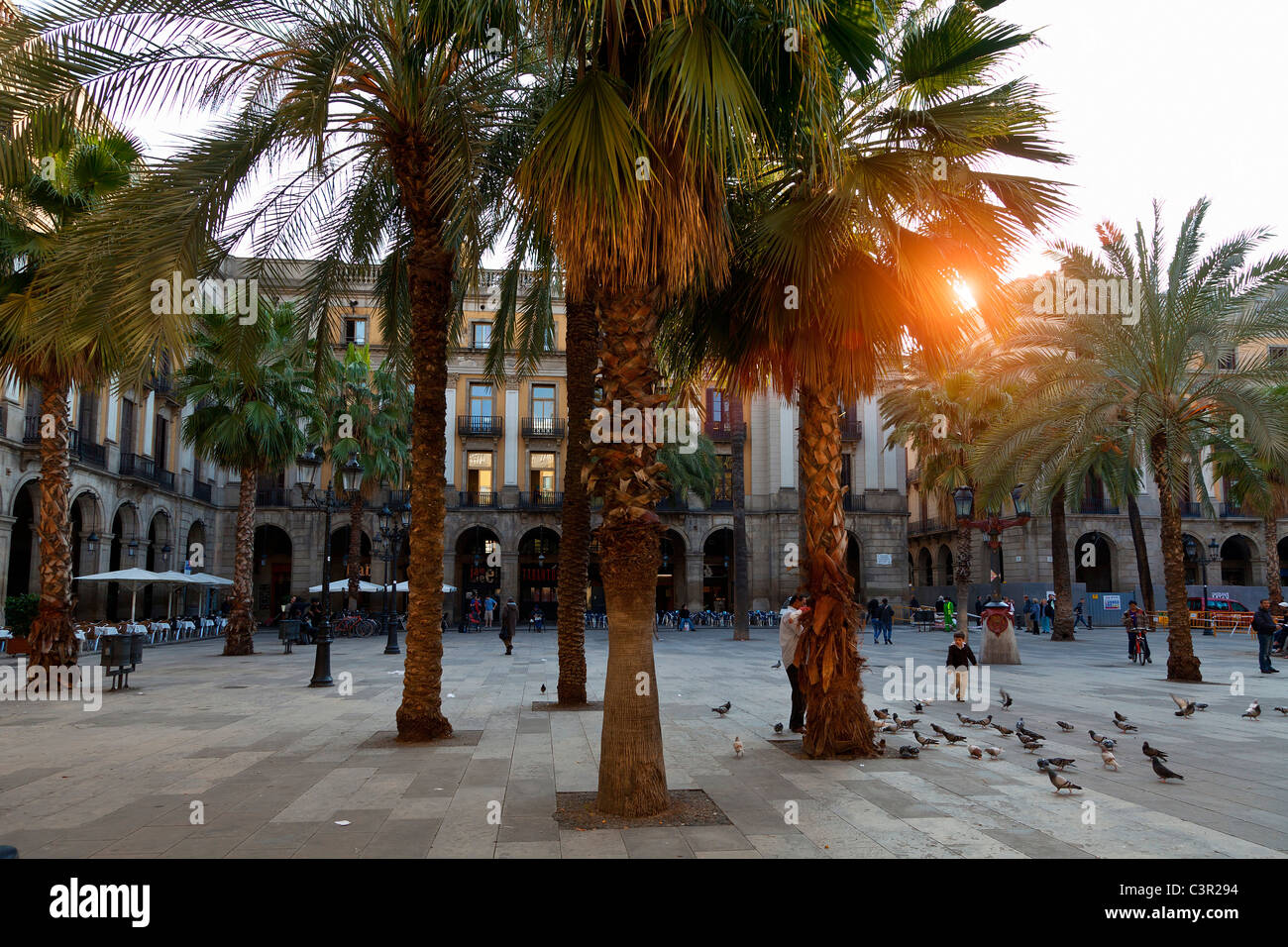 Spain, Catalonia, Barcelona, Barri Gotic district, Placa reial - Stock Image