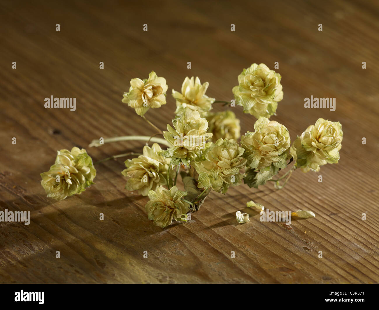 Dried hops on wooden surface - Stock Image