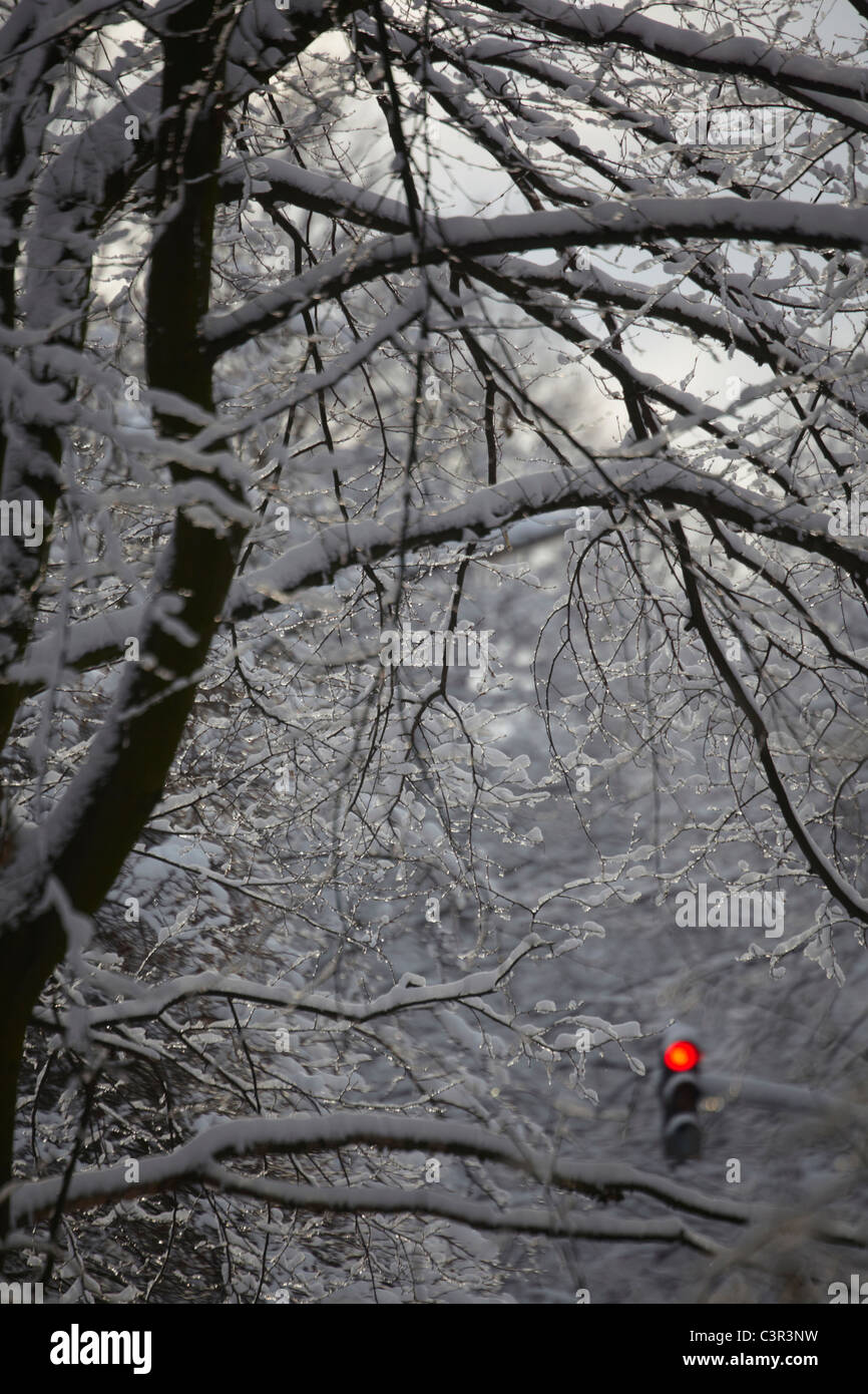 Red light signal in the middle of snow covered branches. - Stock Image