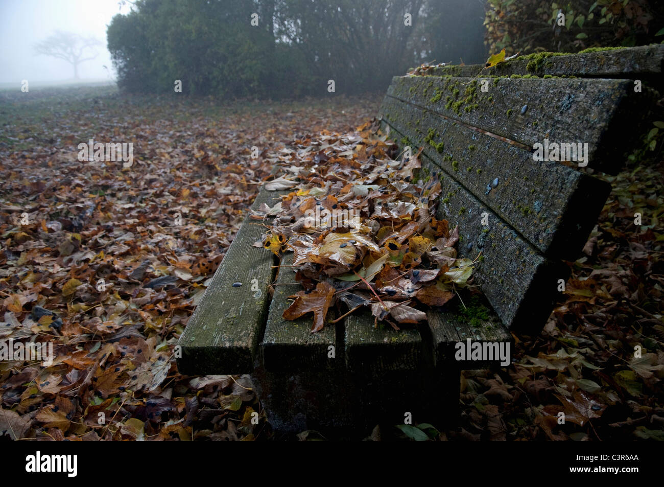 Germany, Bavaria, View of autumn leafs on bench with morning fog - Stock Image